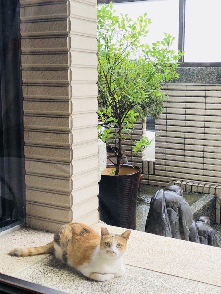 雨宿りニャンコ