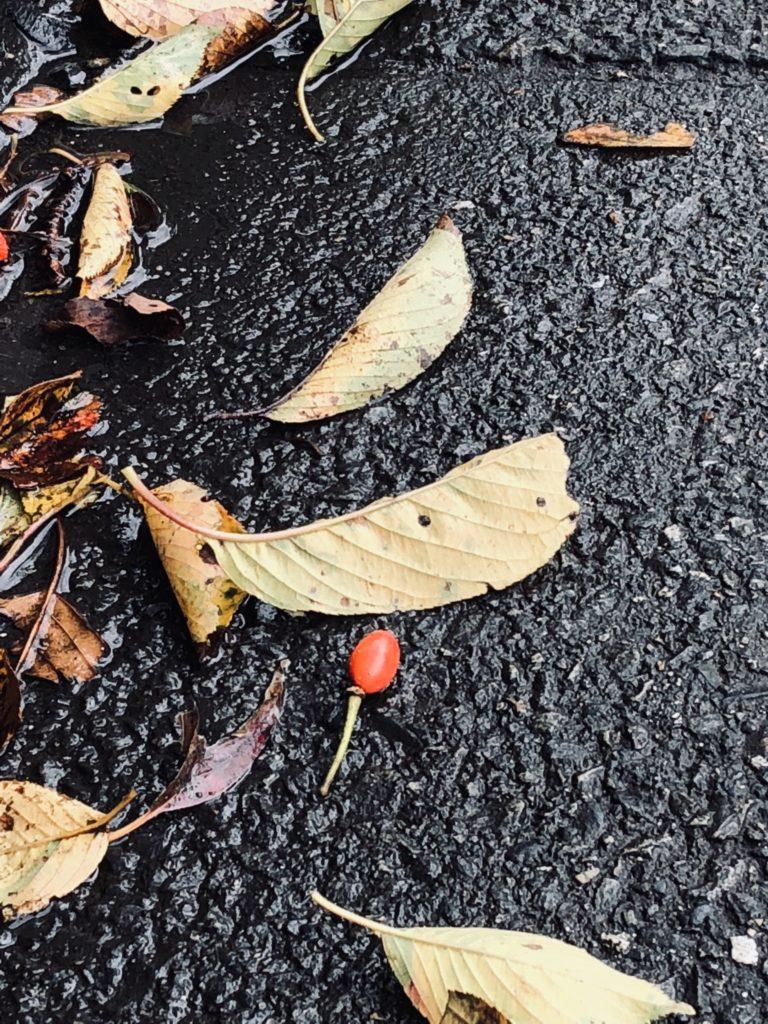 「自分自身を、あきらめないで」Photo by Yasuyo Watanabe,埼玉県入間市,October 2018