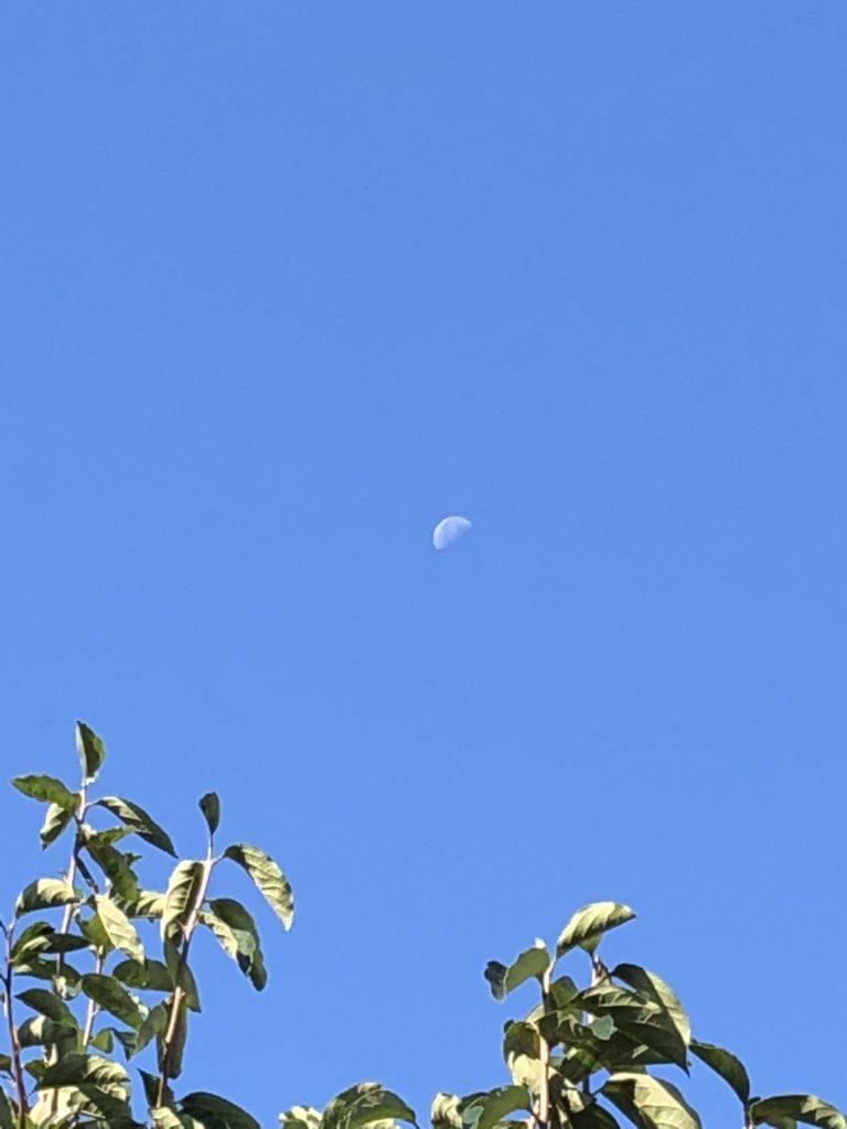 「見あげればこそ望める真昼の月」Photo by Yasuyo Watanabe,埼玉県入間市,October 2018