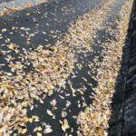 「夢に続く、光の道」Photo by Yasuyo Watanabe,埼玉県所沢市,November 2018