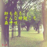 「妖精舞うGajumaruの森を、呼吸する」Photo by Yasuyo Watanabe,台湾,Instagram「yasuyonowa」 December 2016