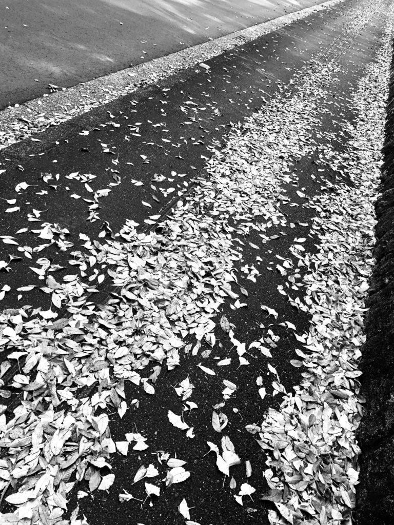 「これも夢に続く道」Photo by Yasuyo Watanabe,埼玉県所沢市,November 2018