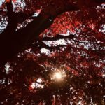 「いくつもの手と手で紡ぐぬくもりを」Photo by Yasuyo Watanabe,埼玉県入間市,November 2018